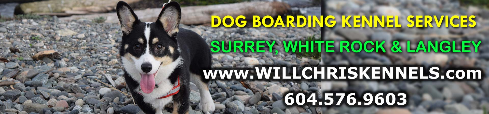 Surrey's Favourite Dog Boarding Kennel Service Provider